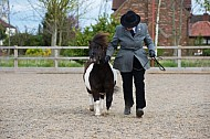 Rainbow Shows - 24APR2016 -  Oakley Equestrian Centre, Crowle: Showing - In Hand