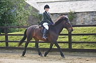 Rainbow Shows - 21AUG2016 - Crow Tree Equestrian, Harrogate: Showing